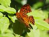 Motyle Schmetterlinge Schmetterling (arjuna_zbycho) Tags: motyle schmetterlinge schmetterling motyl lepidoptera insekten insecta falter tagfalter edelfalter
