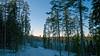 New snow on a forest road (heikki.nylund) Tags: newsnow forestroad jynkänmäkijynkkähill kuopio finland