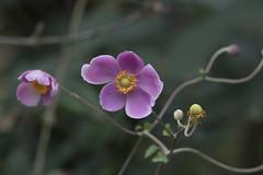 Fall flowers (woodwindfarm) Tags: abigfave