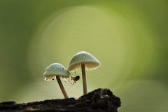 Spider home? (peeteninge) Tags: mushrooms fungus nature autumn bokeh spider paddestoelen natuur herfst spin sonyrx10 sony