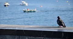 DSC_0094 (Pep Companyó - Barraló) Tags: una tarda donostia san sebastian guipuzkoa pais basc euskadi vacances josep companyo barralo mar cantabric