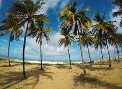Summer feelings (Klauss Egon) Tags: canon brasil brazil portodegalinhas sun sol beach praia playa sea ocean mar sky pernambuco recife areia verão