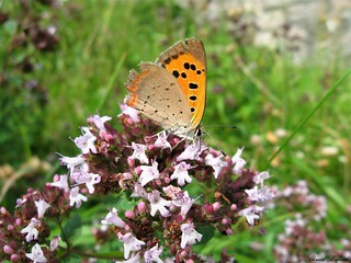 Butterfly 1461