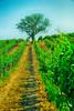 Weingarten_ObstbaumAltenberg_Retz__DSC0991__1 (WeZiHeu44) Tags: weinbau weingarten weinstadt retz retzerland