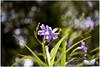 IMG_8335 (Lens Heimat) Tags: 1q 50mm 611 chrome f35 flower m42 meyer primotar redv