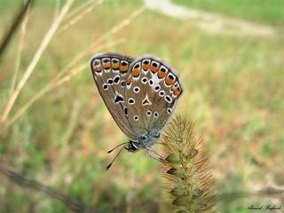 Butterfly 1465