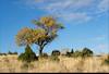 Güz rengi 6 (listera_ovata) Tags: sonya7ii olympus zuiko olympusom3570mmf3545 zuiko35703545 rural manualfocus fall fallcolors tree ağaç güz