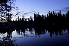 The blue hour. (janrs7) Tags: morning earlymorning lakeside lake water trees norge norway skumsjøen blue spruce afsnikkor1855mmf3556 silhouettes reflection