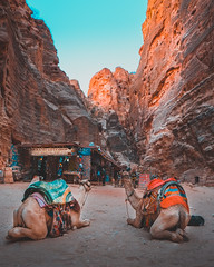 Just Chillin (Saeed Nakho) Tags: petra jordan camels chillim rosecity day seven wonders world daytrip ancient ageless timeless carvedinstone stone mountains sky rocks activity adventure fujifilm