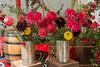 Dahlie  (16) (berndtolksdorf1) Tags: herbst deko dahlien blumen flowers bunt rot red blüten blossoms