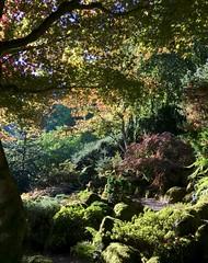 Elk Rock Gardens @ Bishop's Close (J K Amero) Tags: pnw oregon portland pdx autumn trees garden