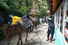 DSC03838 (accabba) Tags: annapurnabasecamp abc trek