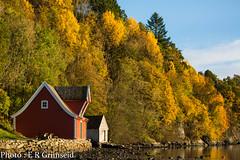 Hordamuseet (2000stargazer) Tags: hordamuseet fanafjorden fana bergen norway landscape autumn autumncolours nature trees forest canon