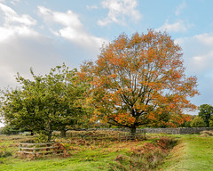 Bradgate Country Park 22nd October 2017 (boddle (Steve Hart)) Tags: bradgate country park 22nd october 2017 steve hart boddle steven bruce wyke road wyken coventry united kingdon england great britain canon 5d mk4 6d 100400mm is usm ii 2470mm standard 815mm fisheyes lens 1635mm l wideangle wide angle wild wilds wildlife life nature natural bird birds flowers flower fungii fungus insect insects spiders butterfly moth butterflies moths creepy crawley winter spring summer autumn seasons sunset weather sun sky cloud clouds panoramic newtownlinford unitedkingdom gb