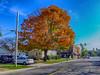 Golden (kendoman26) Tags: hdr nikhdrefexpro2 niksoftware golden autumn autumncolors fall fallcolors tree morrisillinois fuji fujifinepix fujifinepixf750exr