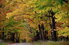 Color Tour Road (CaptPiper) Tags: fall autumn michigan october trees