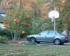 Saturday Colours - The Pumpkin Tree (Pushapoze (nmp)) Tags: tree pumpkins car basketball voiture arbre potirons hoops