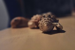 Shells #shells #sea #nature #home #nikon #table (emreileri) Tags: shells sea nature home nikon table