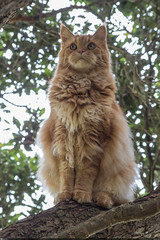 KP170455 (zkarj) Tags: newzealand northisland snickers tawa wellington cat tree