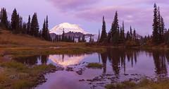 Mt Rainier early in the Morning. (Mt Rainier NP, WA) (Sveta Imnadze) Tags: mtrainier mtrainiernp wa pacificnorthwest