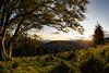 Black Forest Sunset (Michael-Herrmann) Tags: belchen herbst kapfenberg schwarzwald sonne todtnau blackforest sunset autumn fall sun sonnenuntergang hdr fisheye fish eye
