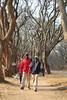 IMG_0070 (Couchabenteurer) Tags: simbabwe jacarandatree harare street