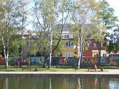 Ostroda - lakeside path, murals and silver birches