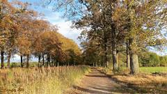 Langs het Grandcanal. (Cajaflez) Tags: herfst autumn autun herbst bomen grandcanal renswoude riet reed coth5