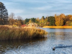 Herbst im Modellboothafen (Sockenhummel) Tags: britzergarten modellboothafen herbst autumn fall bäume ufer see grünberlin berlin