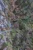 DSC01885 (cassolclaudio) Tags: montagna ferrata rio secco trento