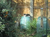 IMG_4523 (trevor-v) Tags: cat compost bin