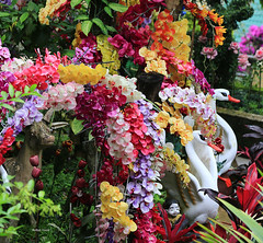 Orchidelicious (Robyn Hooz) Tags: orchids orchidee fiori flowers giardino chiangmai foglie garden buddah rainbow species