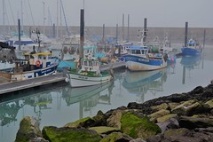 Fisherboats in the cold morning (Eric - horse traveler) Tags: boat fisher fisherboat harbour sea cold morning matin pêche bateau pêcheur mer port brume fog coloré color light