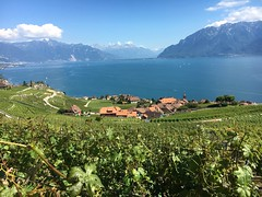 Le Lavaux (preichli) Tags: lake heritage panorama vine vineyard saintsaphorin rivaz chexbres suisse vaud humanité mondial patrimoine unesco viticole léman lac vignes terrasses vignoble lavaux