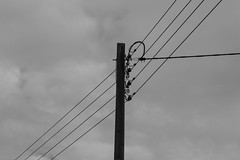 20171008-DSC01501 (Fabian Tomczyk) Tags: blackandwhite pole wires lines power electricity gray sky wood woodenpole edited lightroom sony sonyalpha6000 alpha6000 alphacollective alphaddicted minolta rokkor manualfocus