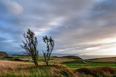 Junto al mar (ccc.39) Tags: españa asturias gozón costa cantábrico mar árboles nubes nuboso atardecer sunset