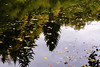 reverse (janetfrerichs) Tags: nikond610 nikon fullframe autumn fall tree nature herbst vollformat blätter farbenfroh clourful mirrow reflection spiegel spiegelung wasser see lake reverse
