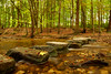 Stepping stones (another_scotsman) Tags: river forest trees autumn stepping stones