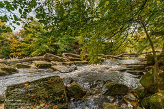 The river Greta at Rokeby, near Barnard Castle, Teesdale, UK in autumn (Richard Laidler) Tags: autumn autumncolour autumncolours autumntints bubbles cascade cascades color colors colour colourful colours deciduous fall foam froth gold greta lowerteesdale northeastengland river riverbank riverbanks rock rocks rokeby splash splashing sun sunny sunshine teesdale tints trees yellow