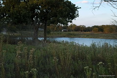 the shed across the lake (pvh photo) Tags: weeds smca3528