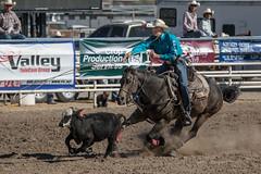 GY8A4618.jpg (BP3811) Tags: 8seconds 2017 allen arizona bareback barrel bell belt bit boots boy breakaway bronc buck buckle bull bulldogger bustin busting calf chase clown corral cow cowboys cowgirl days fall gate hat hazer header healer helmet horns horse jump kids lariat leap mutton october queen racing reins rex riders riding rodeo rope roping run saddle sheep spurs steer team teamwork tie twist wilcox wrestling