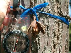 Cedrela odorata seed capsule and bark (J. B. Friday) Tags: cedrela cedrelaodorata meliaceae spanishcedar