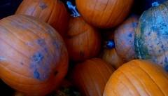 Pumpkins! (Maenette1) Tags: pumpkins jacksfreshmarket mmplaza orange jackolanterns pies menominee uppermichigan flicker365 michiganfavorites
