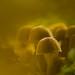 GlowRoom-  Mushroom--1-1