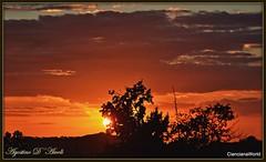 Tramonto tra gli alberi ad Ottobre - 2017 (agostinodascoli) Tags: alberi nikon nikkor cianciana sicilia tramonto sunset paesaggio landscape agostinodascoli cielo sole nature texture