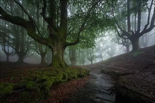 El bosque encantado II