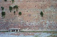 """ mycological love "" (pigianca) Tags: italy siena fortezza wall writer streetphoto urbanphoto leicam82 summicronc40mmf2"