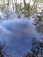 Reflection (Tabea-Jane) Tags: sea lake trees heaven sky clouds water nature