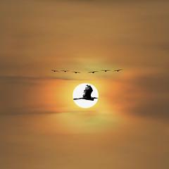 Sunset at Hitech (sharad.bapat) Tags: sunset amazing amazingsunsets birds silhouette hyderabad nature natgeo nationalgeographic awesome colors evening hues india natgeocreative natural orange outdoor sun sunsets telangana vibrant saturday supersaturday hitechcity hitech