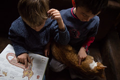. (Joanna Mrowka) Tags: cat child lesson poland travel travelphotography childphotogpraphy children boy friends littledoglaughedstories